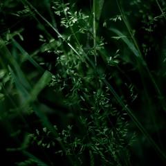 Forest Grass 024 (noahbw) Tags: d5000 dof nikon ryersonwoodsforestpreserve abstract blur dark darkness depthoffield forest grass light lowlight natural noahbw shadow spring square woods
