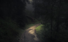 Light in the Dark (Netsrak) Tags: at alpen alps baum berg bäume eu europa europe landschaft natur nebel wald fog landscape mist mountain nature woods kleinwalsertal