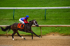 A Day at the Races (Churchill Downs) (Rodney Dunning) Tags: churchilldowns horses horseracing kentucky louisville