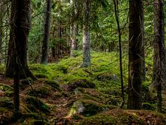 East-Helsinki, Finland. (Esa Suomaa) Tags: esasuomaa forest helsinki scandinavia finland europe trees path olympusomd zuikopro