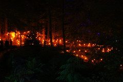 2018 - 4.10.18 Enchanted Forest (44) (marie137) Tags: forest lights trees show marie137 bright colourful pitlochry treeman attraction visit entertainment music outdoors sculptures wicker food drink family people water animation