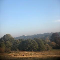 Morning run (marc.barrot) Tags: runner run park uk nw3 london heath hampstead