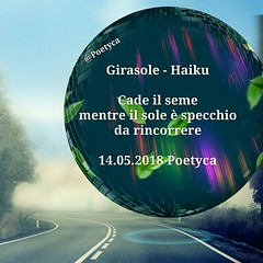 Girasole – Haiku (Poetyca) Tags: featured image haiku di poetyca immagini e poesie poesia sfumature poetiche
