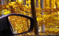 Autumn in the mirror (Baubec Izzet) Tags: baubecizzet pentax bokeh autumn leaves trees nature mirror