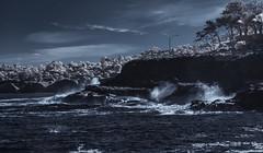 December Surf In La Jolla (Bill Gracey 22 Million Views) Tags: infrared infraredphotography ir convertedinfraredcamera surf lajolla highcontrast bigsurf water waves pacificocean surfsup