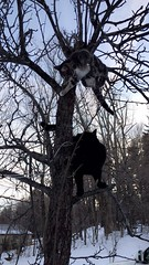Hanging Out (TangerinesDreamFinds) Tags: cat kitten black tabby halloween magic witch colonial house