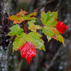 Spillage (Bert CR) Tags: colorful fall fallcolors wet rain intherain takewhatyouget spillage nature mothernature