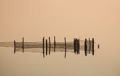 (nadiaorioliphoto) Tags: pink rosa minimal acqua reti net water linee