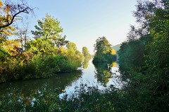 Herbststimmung am Main - Autumn mood at the river Main (cammino5) Tags: dschungelpfad volkach astheim main oktober 2018 naturschutzgebiet franken bayern deutschland spiegelung herbst