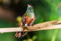 BIRD (cune1) Tags: uccelli birds animali animals natura nature alberi trees italia oasidisantalessio