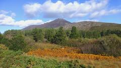 Silent Valley, County Down, Northern Ireland (east med wanderer) Tags: ulster northernireland silentvalley reservoir mournemountains granite forest bracken countydown uk mountains