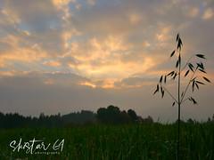 Oberort (skistar64) Tags: morgen morning herbst autumn oberort masternitzen pisweg kärnten carinthia