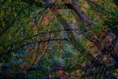 tridral_2018-10-15 (tridral) Tags: cymru wales caerdydd cardiff parcbute butepark afon river coeden tree amlygiaddwbl doubleexposure