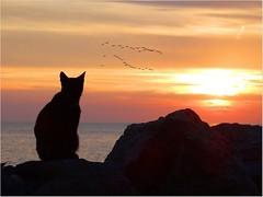 Insieme.. (antonè) Tags: gatto chat cat mare alghero sardegna antonè gabbiani uccelli stormo silhouette