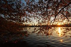 Nicht mehr lange (Lilongwe2007) Tags: hamburg deutschland laub blätter alster herbst bunt sonnenuntergang spiegelung sonnenstern rathaus binnenalster aussicht lombardsbrücke wasser kirchturm kirschbäume
