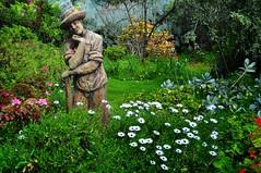 Love's garden (holly hop) Tags: garden cottage lovescottage green nationaltrust historic 1868 starnaud