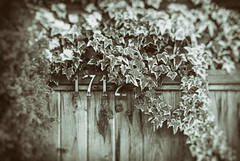 Ivy 1712 (Katrina Wright) Tags: dsc1828edit fence fencedfriday hff ivy 1712 1 7 12 plant overgrown desaturated numbers wood