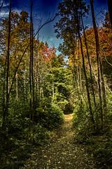 mont st-gregoire 3 (jeanbernardvidal) Tags: sentier montagne arbres bois canon