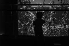 Will (17 months old) at Ripley's Aquarium (Katherine Ridgley) Tags: toronto torontotoddler toddler toddlerboy toddlerfashion cutetoddler ripleysaquarium ripleys ripleysaquariumofcanada aquarium blackwhite blackandwhite child kid cutekid cute