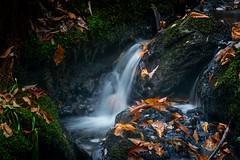 Take Me Away (Rob Pitt) Tags: autumnuk mini waterfall leaves rocks water betwsycoed north wales forest moss sony a7rii sigma 70300mm longexposure
