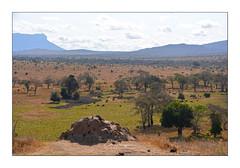 Taita Hills Kenya (Claire PARMEGGIANI Photos) Tags: africa africangallery africanlife africanwildlife eastafrica gamedrive kenya safari tsavo wildlife wildafrica