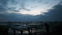 *** (pszcz9) Tags: polska poland przyroda nature natura naturaleza pejzaż landscape mokradła wetlands wiosna spring zachódsłońca sunset beautifulearth sony a77 drzewo tree woda water