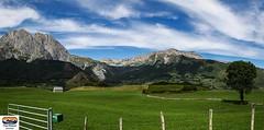 Vallée d'Aspe (https://pays-basque.coline-buch.fr/) Tags: 2018 colinebuch campagne extérieur montagne nature paysage vallée daspe valléedaspe prairie herbes arbre