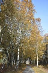 kijk_D711059 (Vogelmelk) Tags: veluwe bos herfst gelderland forest autumn nederland nature natuur
