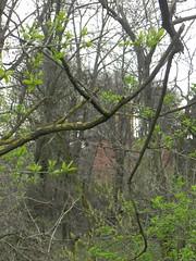 DSCN0087 (Gianluigi Roda / Photographer) Tags: springtime april 2013 springblossom