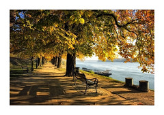 Autumn promenade (pusiga) Tags: paks hungary trees river danube promenade autumn sunshine
