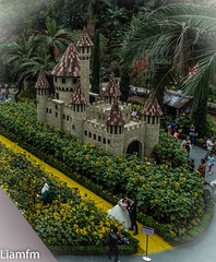 from cloud forest to Flower Dome 6 (Liamfm .) Tags: singapore flowerdome flowerdomeandcloudforestdome sunflowers flowers