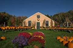 Autumn Display (Bud in Wells, Maine) Tags: kennebunk maine wallingfordfarm autumn route1 colors pumpkins mums