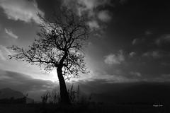 Le silence (Jacques Isner) Tags: arbre contrejour plainedereymure isère pentax pentaxart pentaxflickraward pentaxk1 samyang14mm samyang jacquesisner