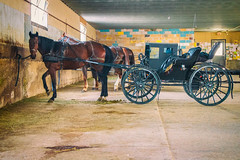 (A Great Capture) Tags: hitched horses canada ontario stjacobs amish horseandbuggy agreatcapture agc wwwagreatcapturecom adjm ash2276 ashleylduffus ald mobilejay jamesmitchell on canadian photographer northamerica fall autumn automne herbst autunno 2017 eos digital dslr lens canon 70d sigma horse drawn carriage buggy