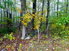 P1020169 (rpealit) Tags: scenery wildlife nature weldon brook management area
