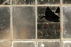 Broken Glass (gripspix) Tags: 20180927 lislesurledoubs plant fabrik alt old industriebrache abandoned verlassen lagerraum storage sheddach window fenster sprossenfenster metal metall muntinwindow broken pane scheibe zerbrochen
