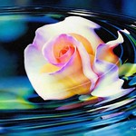 Digital Oil Painting of a Rose Floating in Water thumbnail