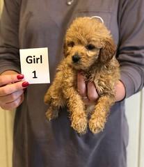Kizzie Girl 1 12-9