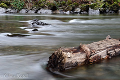 Log and Rock (cmrotell) Tags: naturephotography nature nikon d500 water log landscape flowing flow calming river rocks rock outside nikkor