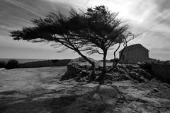 Avel Gornôg (jieme74) Tags: ouest ventdouest arbre ciel noiretblanc borddemer finistere bretagne paysage monochrome vent