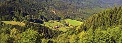 Kopie von 18-09-27 (10) 2 (M. Schirmer Berlin) Tags: deutschland germany schwarzwald blackforest simonswald simonswäldertal l173 wildegutach wald nadelwald wood