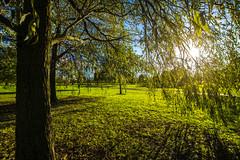 Through the trees (Gary S Bond) Tags: great britain united kingdom 2018 a65 alpha autumn city england haslam lancashire leaves north october park preston shabbagaz sony uk west greatbritain unitedkingdom fulwood