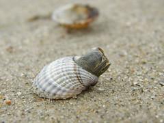 34267321 (aniaerm) Tags: sea coastalfinds sand