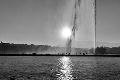 jet d'eau (fotoleder) Tags: 2018 automne nb monochrome noiretblanc lac rade soleil contrejour ville genève flederma ge suisse ch