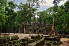 Temple ruins of Ta Prohm (a.k.a. jungle temple) in Angkor Archeological Park near Siem Reap, Cambodia (UweBKK (α 77 on )) Tags: angkor archeological park siem reap cambodia southeast asia sony alpha 77 slt dslr ta prohm jungle temple ruins ancient history historical archeology stone tree forest