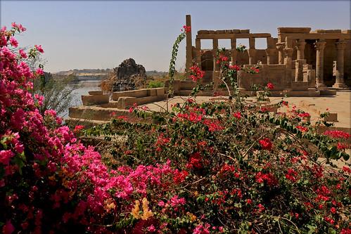 Цветы на руинах древней цивилизации. Flowers on the ruins of an ancient civilization.