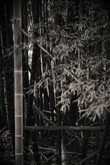 日吉神社 (小川 Ogawasan) Tags: japan japon kyushu oita usuki 大分県 臼杵市 深田 日吉神社 hiyoshishrine shinto kyūshū 九州