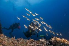 IMG_1337 (davide.clementelli) Tags: diving dive dives padi immersione immersioni ampportofino portofino liguria friends amici underwater underwaterlife sottacqua