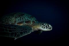 IMG_7438 (Gil Xavier) Tags: underwater scuba philippines canon fantasea g7xmk2 cebu moalbal turtlebay