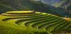 _U1H2798-2803.0918 Mâm Xôi La Pán Tẩn,Mù Cang Chải,Yên Bái (HUONGBEO PHOTO) Tags: ef100400mmf4556lisusm canoneos1dsmarkiii yênbái mùcangchải mùavàngvùngcao mùalúachín mùagặt mâmxôilapántẩn photography peaceful curves countryside highland harvestingseason terraces rizière terrasse vietnam viêtnam paysage champ paddyfields color colors colours green vert couleur couleurs landscape goldenhour